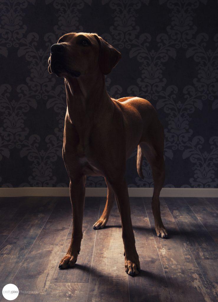imhierhundjetzt hund scaled